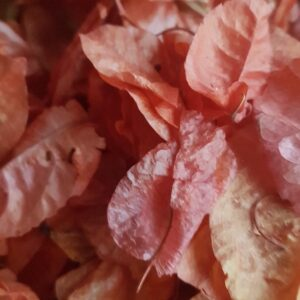 Burnt Orange biodegradable confetti