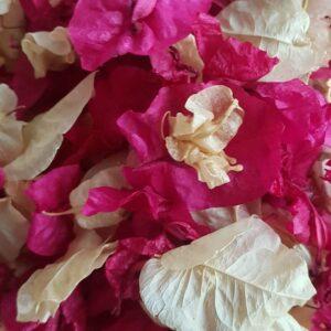 petali biodegradable petal confetti