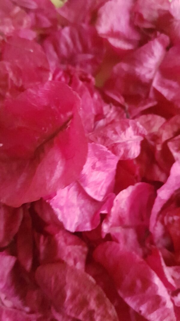 pretty in pink biodegradable petal confetti