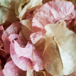 romanza biodegradable petal confetti